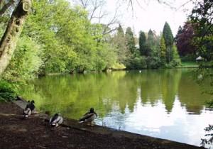 lake_2002
